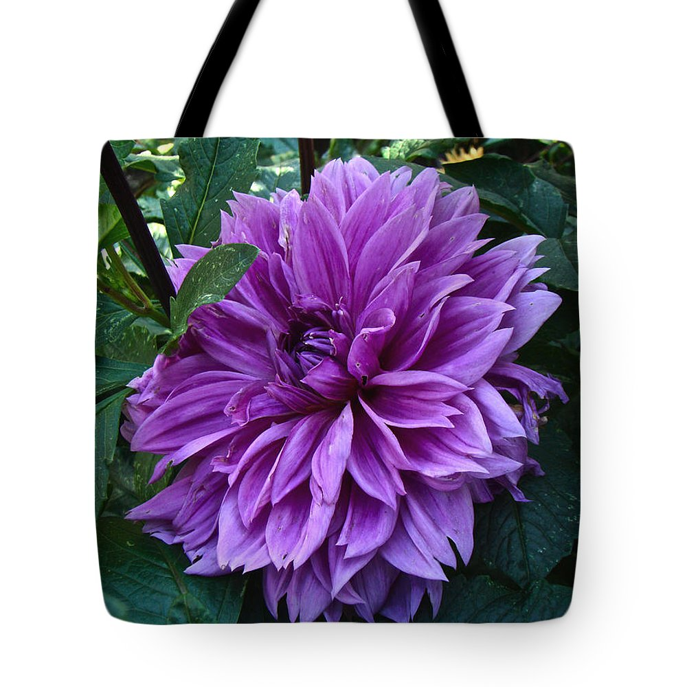 Dahlia Tote Bag featuring the photograph Purple Haze Dahlia by Mother Nature