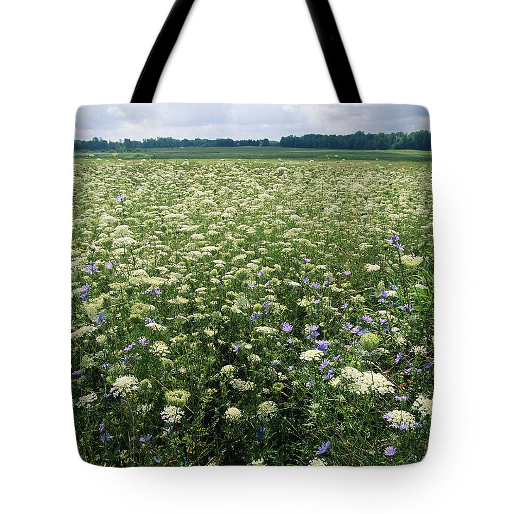 North America Tote Bag featuring the photograph Purple Loosestrife Flowers Bloom by Skip Brown