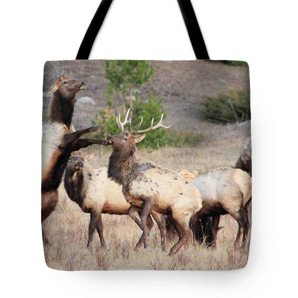 Elk Tote Bag featuring the photograph Put Up Your Dukes by Shane Bechler