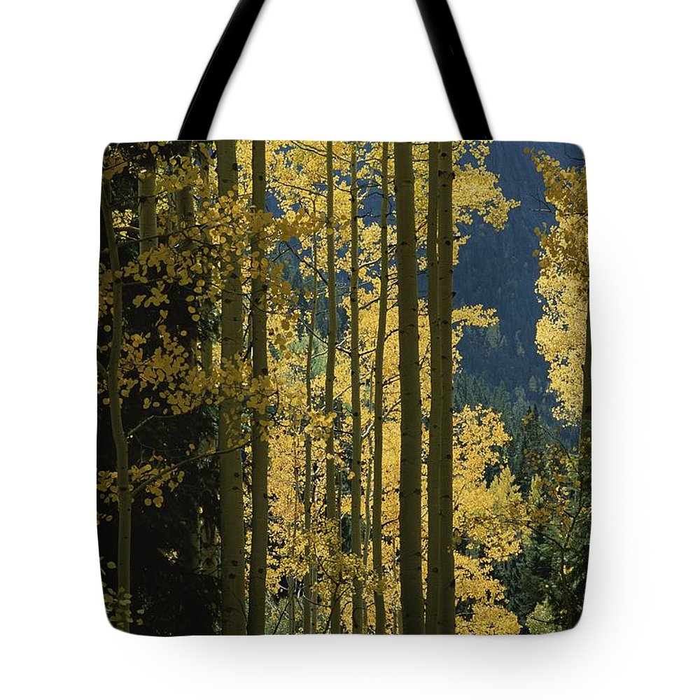 North America Tote Bag featuring the photograph Quaking Aspen Trees Display Brilliant by Marc Moritsch