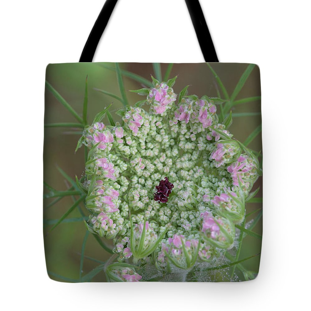 Daucus Carota Tote Bag featuring the photograph Queen Anne's Lace Flower Partly Open With Dew by Daniel Reed