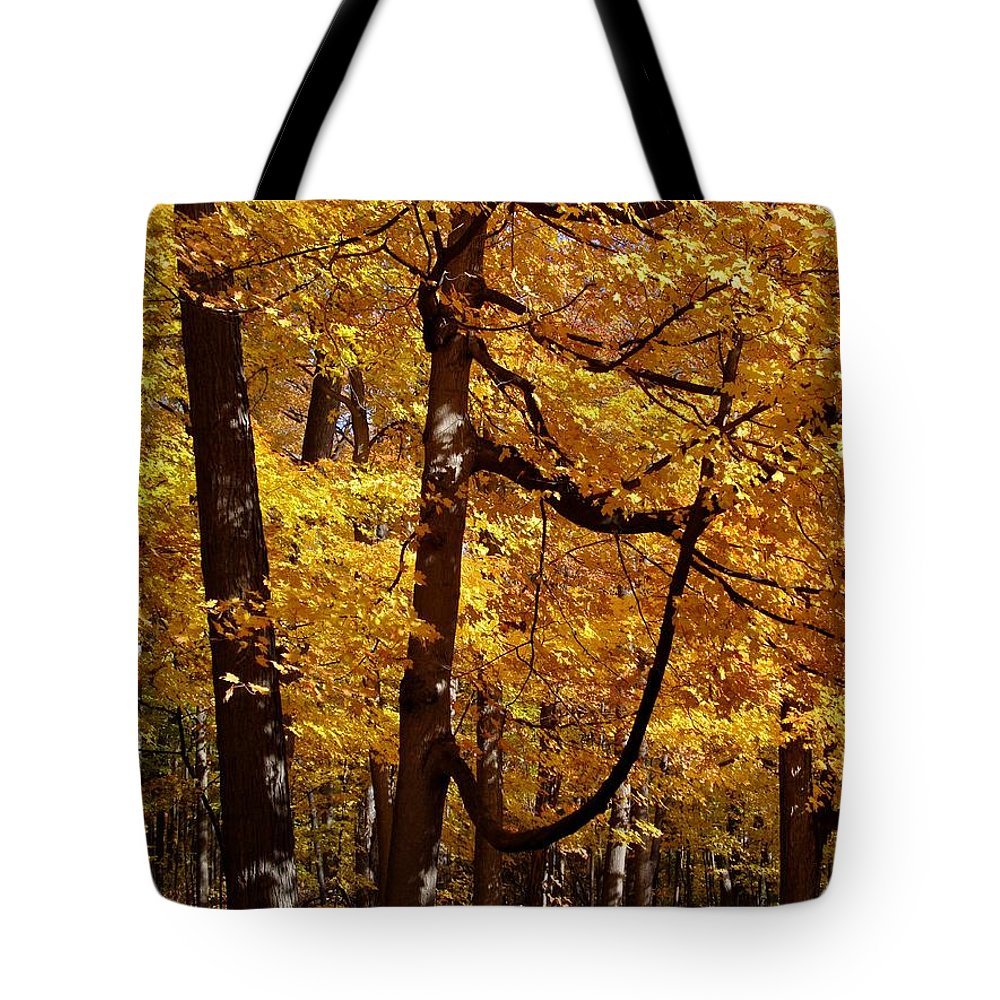 Fall Tote Bag featuring the photograph Quiet Walk by Joseph Yarbrough