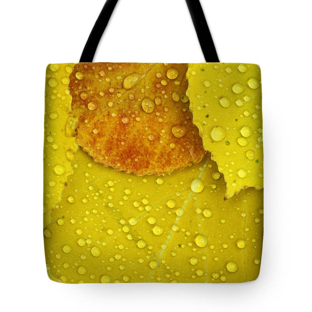 Aspen Leaves Tote Bag featuring the photograph Rain Drops On Aspen Leaves In Autumn by Mike Grandmailson