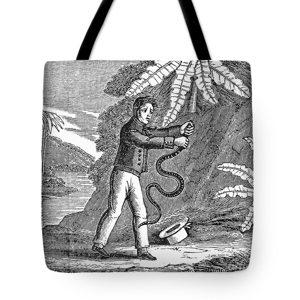 19th Century Tote Bag featuring the photograph Rattlesnake by Granger