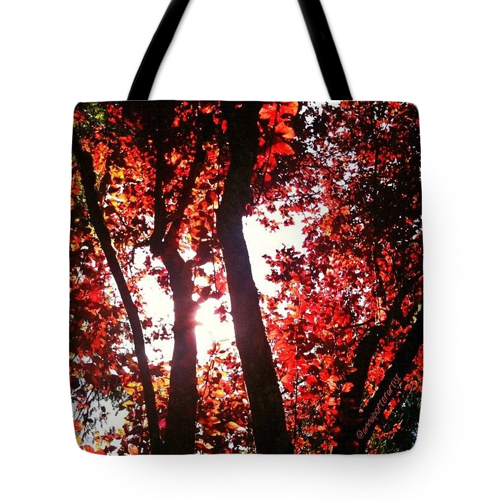 Autumn Tote Bag featuring the photograph Reaching For Glory - Afternoon Light by Anna Porter