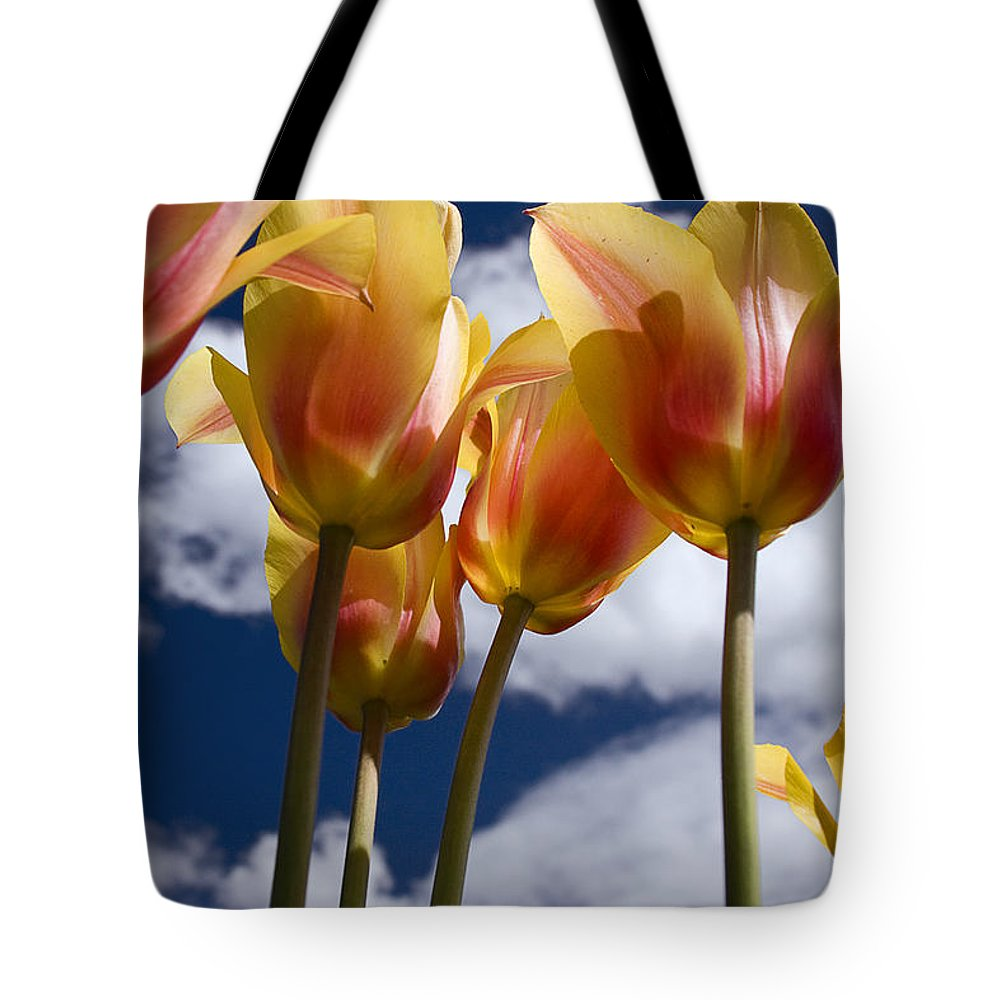 Reaching For The Clouds Tote Bag featuring the photograph Reaching For The Clouds by Wes and Dotty Weber