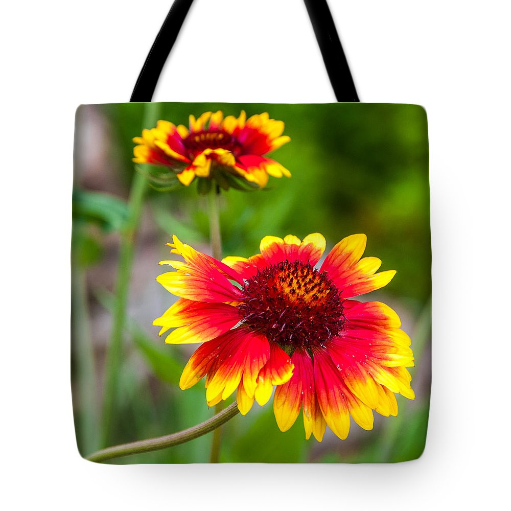 Flowers Tote Bag featuring the photograph Reaching by Guy Whiteley