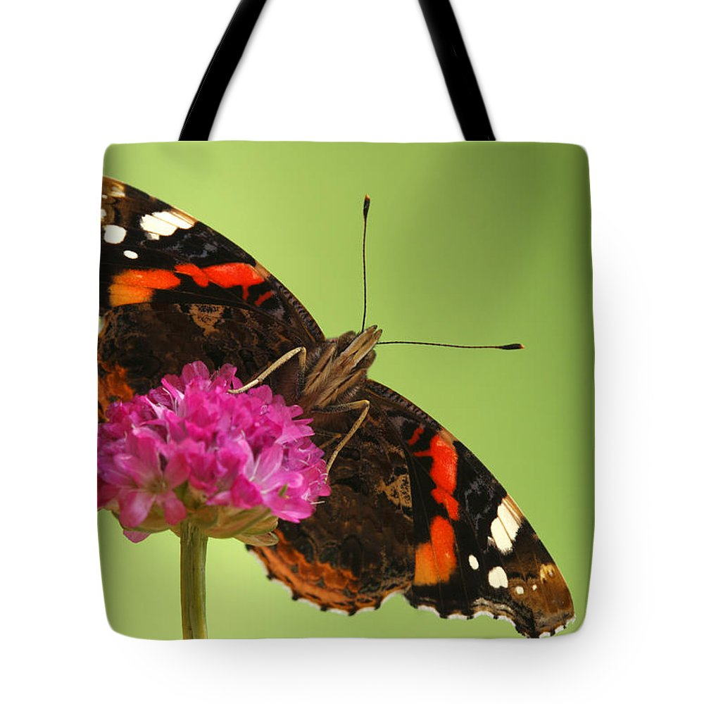 Fn Tote Bag featuring the photograph Red Admiral Vanessa Atalanta by Silvia Reiche
