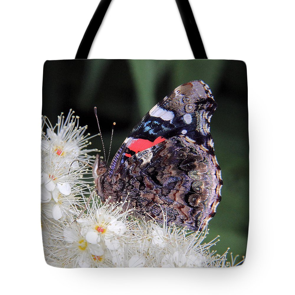 Red Admiral Tote Bag featuring the photograph Red Admiral With Folded Wings by Doris Potter