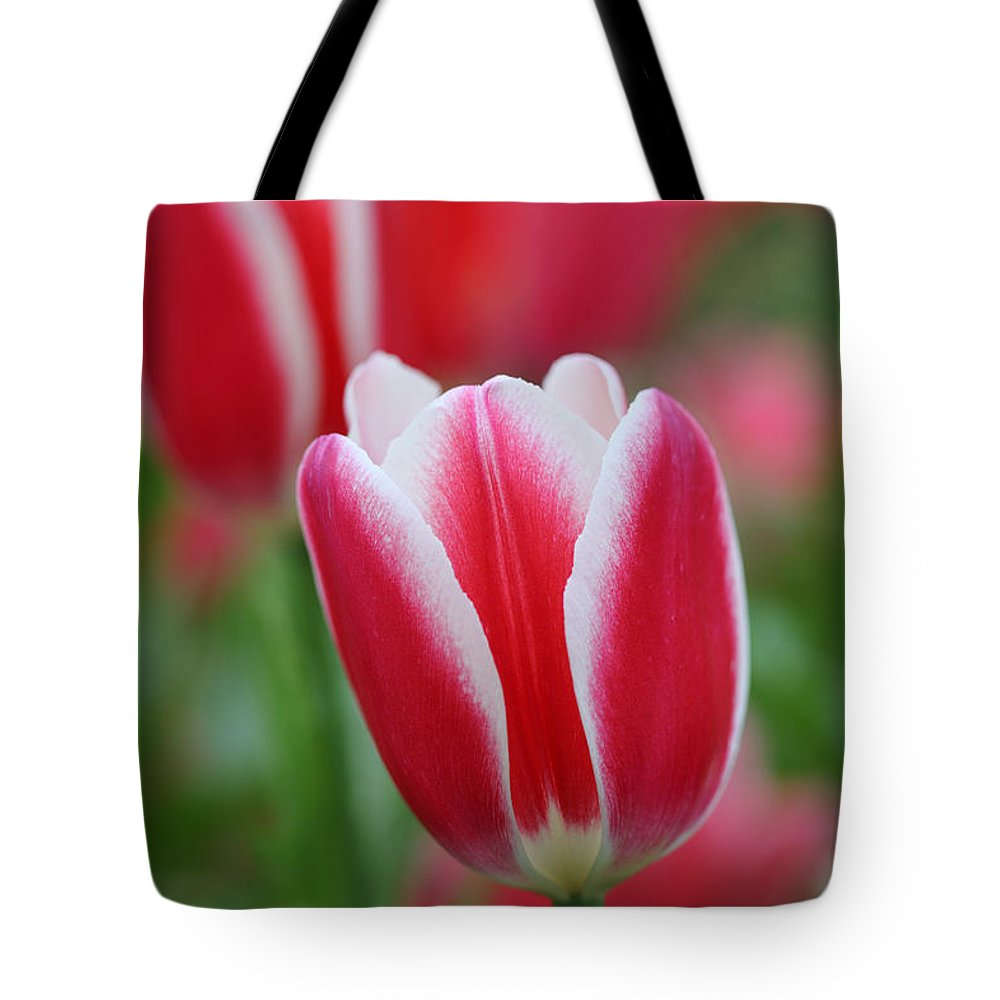 Red Tote Bag featuring the photograph Red And White Tulips by Nicholas Burningham