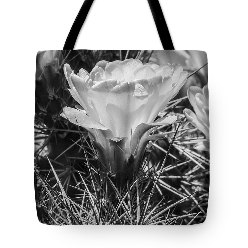 Black And White Tote Bag featuring the photograph Red Cactus Flower Bw by Darcy Michaelchuk