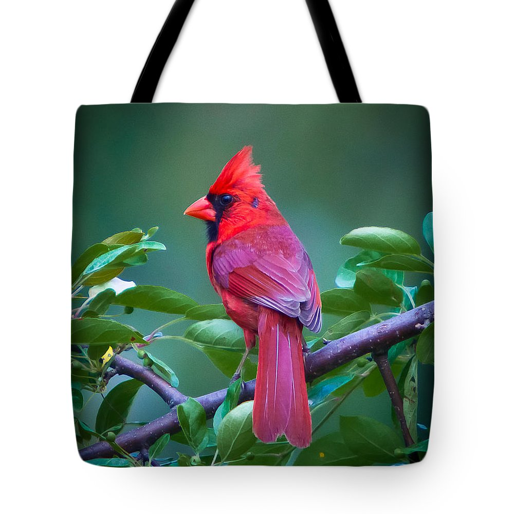 Red Tote Bag featuring the photograph Red Cardinal On Branch by Jiayin Ma
