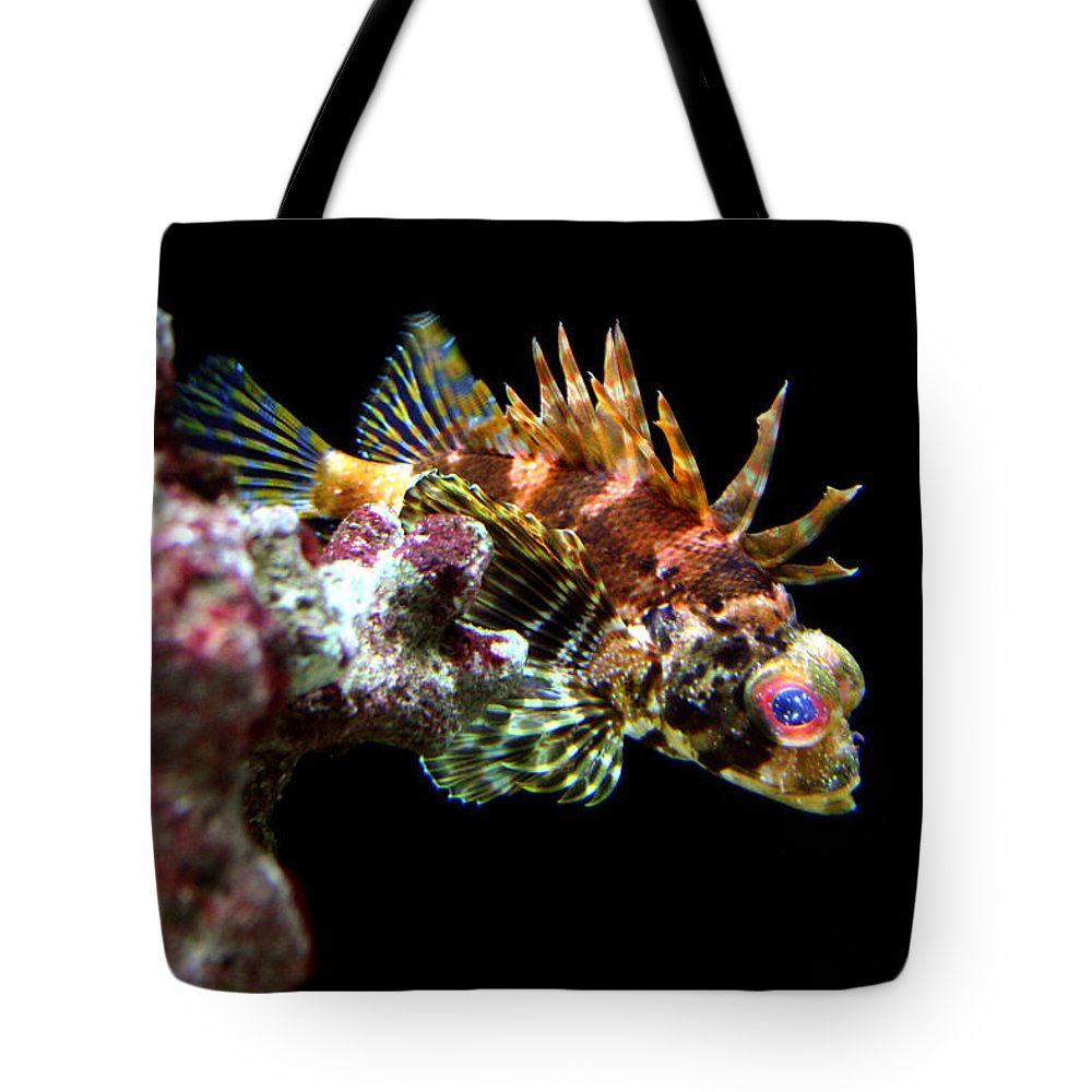 Jennifer Bright Art Tote Bag featuring the photograph Red Eyed Scorpion Fish by Jennifer Bright