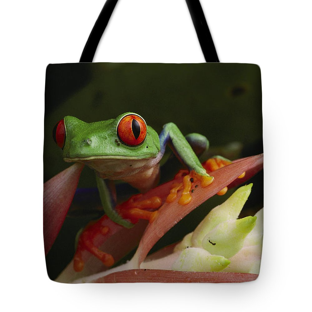 costa Rica Tote Bag featuring the photograph Red-eyed Tree Frog In Costa Rica by Michael Nichols