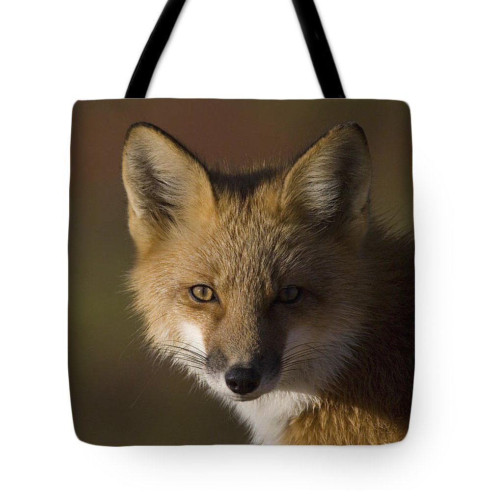 Mp Tote Bag featuring the photograph Red Fox Vulpes Vulpes Portrait, Alaska by Michael Quinton