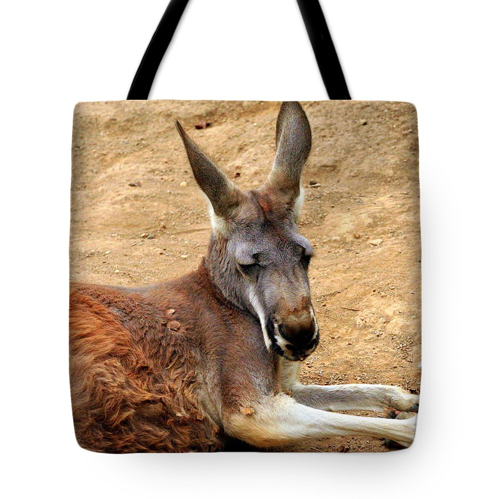 Macropus Rufus Tote Bag featuring the photograph Red Kangaroo by Laurel Talabere