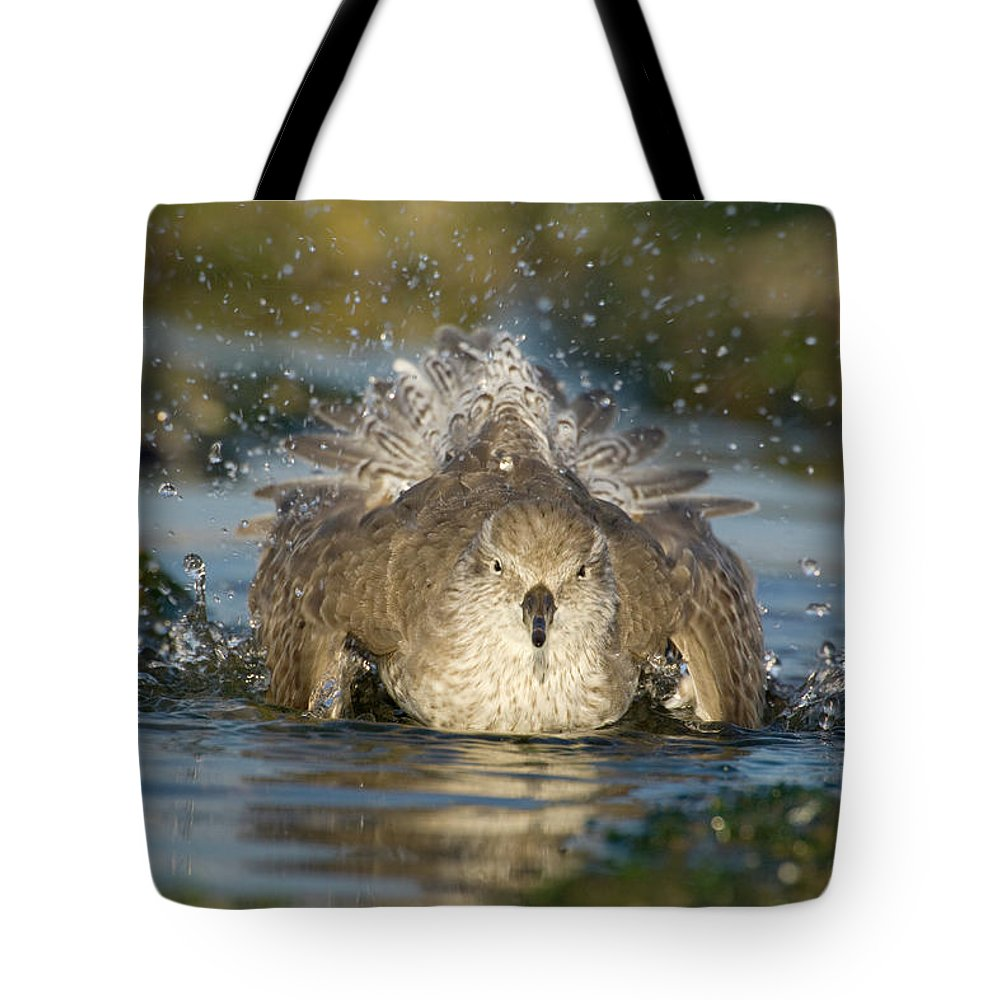Fn Tote Bag featuring the photograph Red Knot Calidris Canutus Bathing, Den by Do Van Dijck