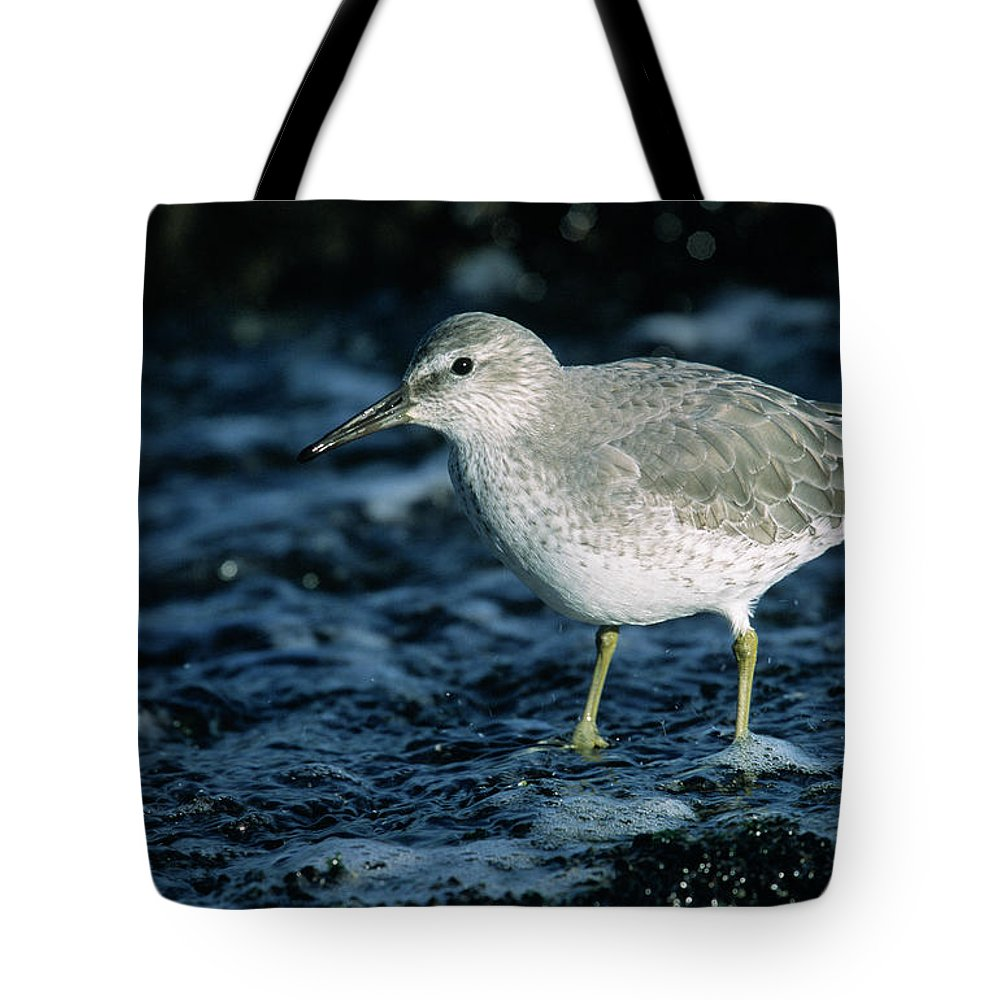 Fn Tote Bag featuring the photograph Red Knot Calidris Canutus In Winter by Hans Schouten