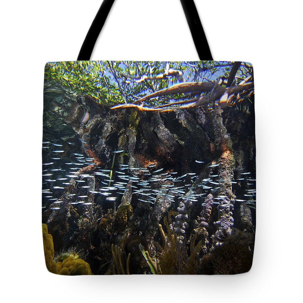 Mp Tote Bag featuring the photograph Red Mangrove Rhizophora Mangle Aerial by Christian Ziegler