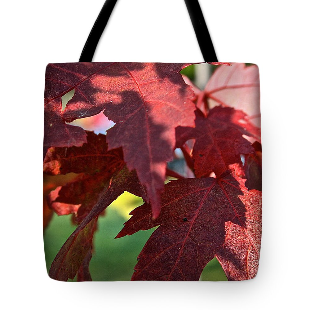 Outdoors Tote Bag featuring the photograph Red Maple by Susan Herber