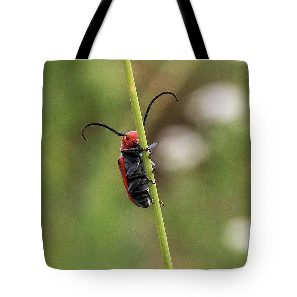 Red Milkweed Beetle Tote Bag featuring the photograph Red Milkweed Beetle by Doris Potter
