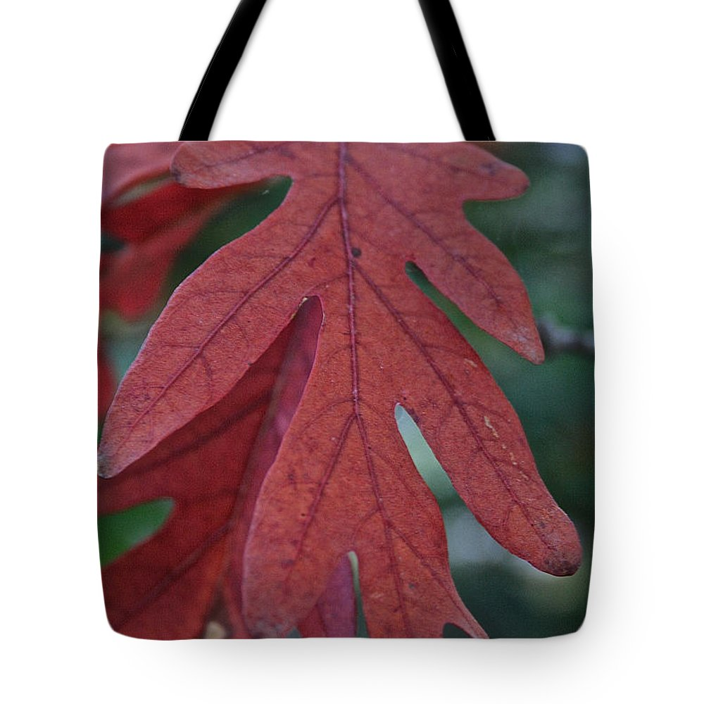 Outdoors Tote Bag featuring the photograph Red Oak Leaf by Susan Herber