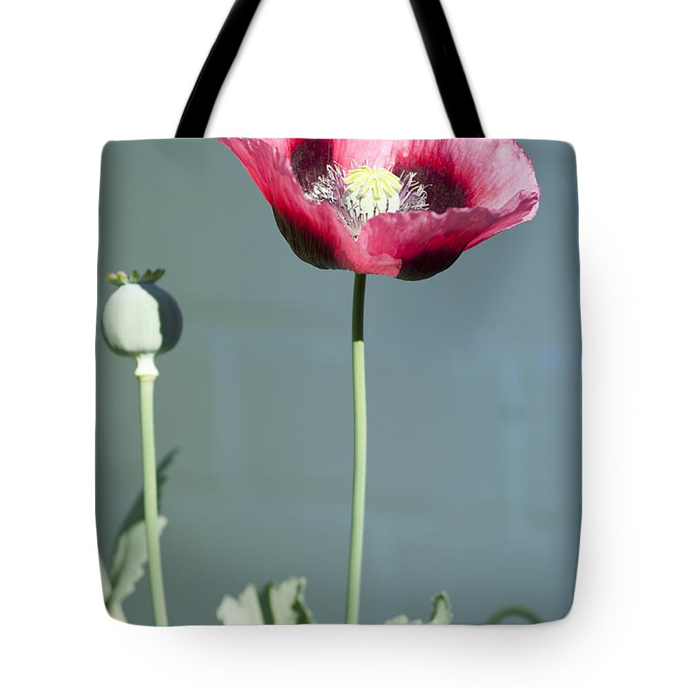England Tote Bag featuring the photograph Red Opium Poppy by Andrew Michael