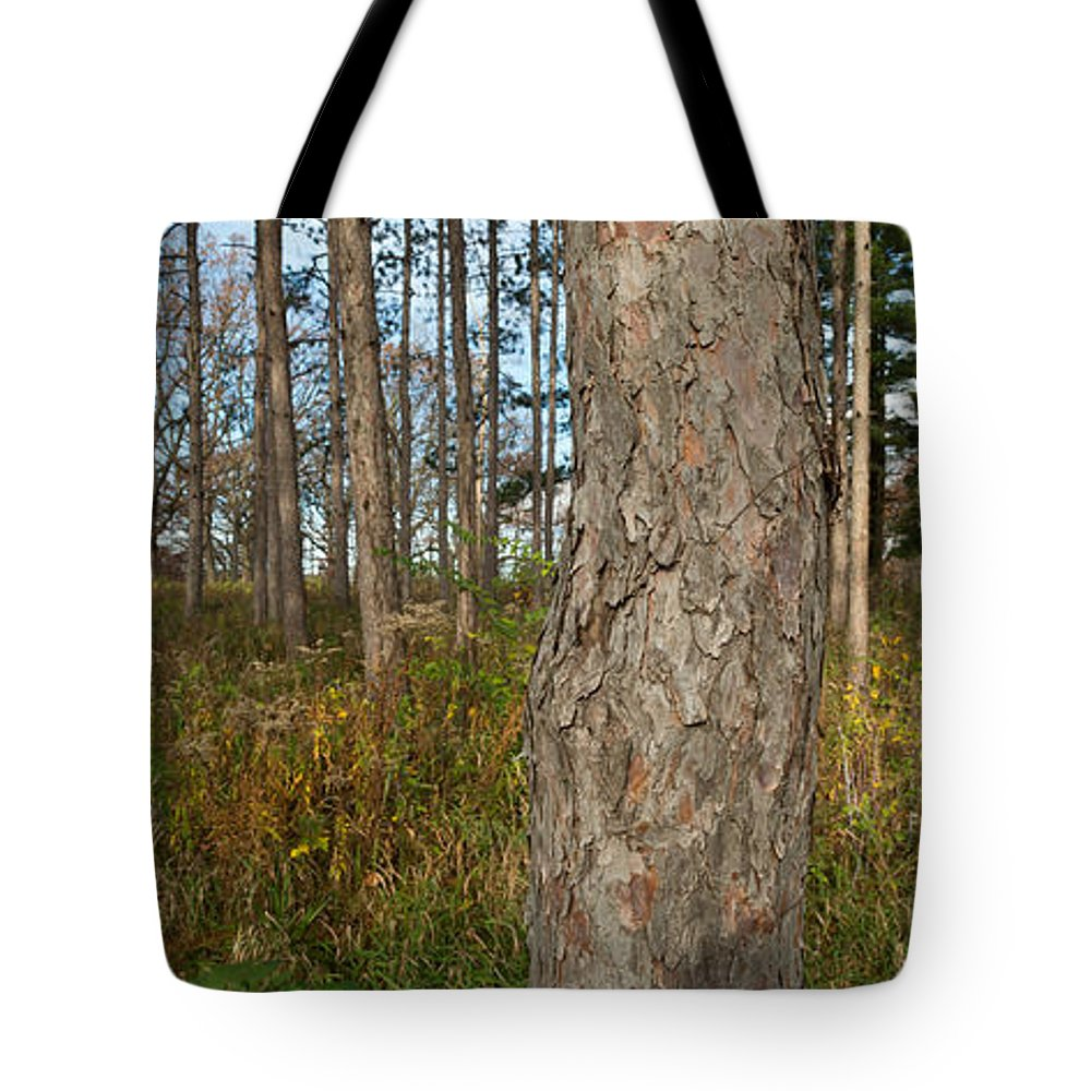 Morton Tote Bag featuring the photograph Red Pine Forest by Steve Gadomski