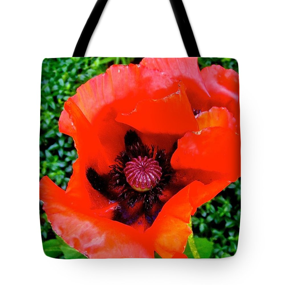 Poppy Tote Bag featuring the photograph Red Poppy by Stephanie Moore