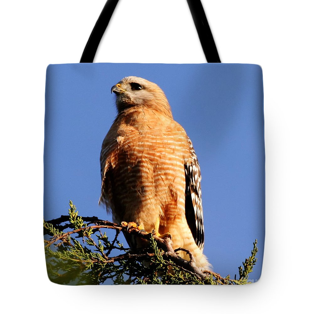 Birds Tote Bag featuring the photograph Pismo Beach Red Shoulder Hawk by Tap On Photo