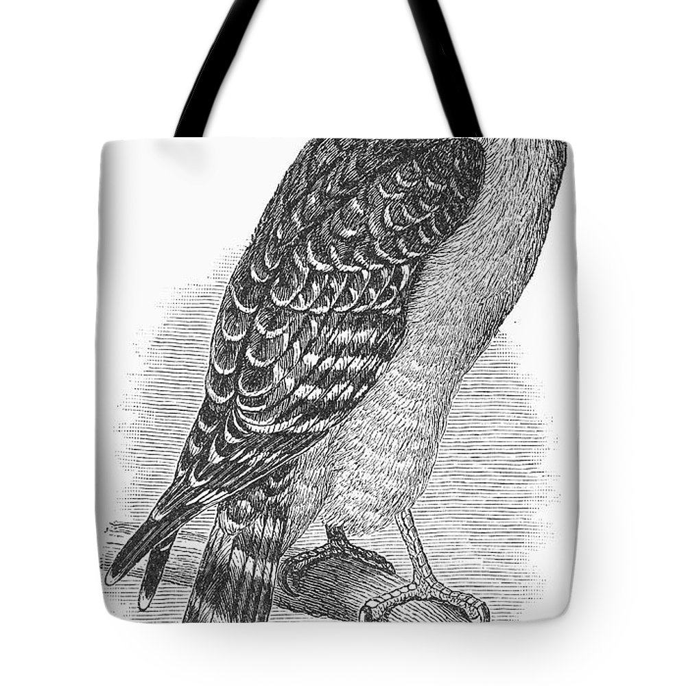 1890 Tote Bag featuring the photograph Red-shouldered Hawk, 1890 by Granger