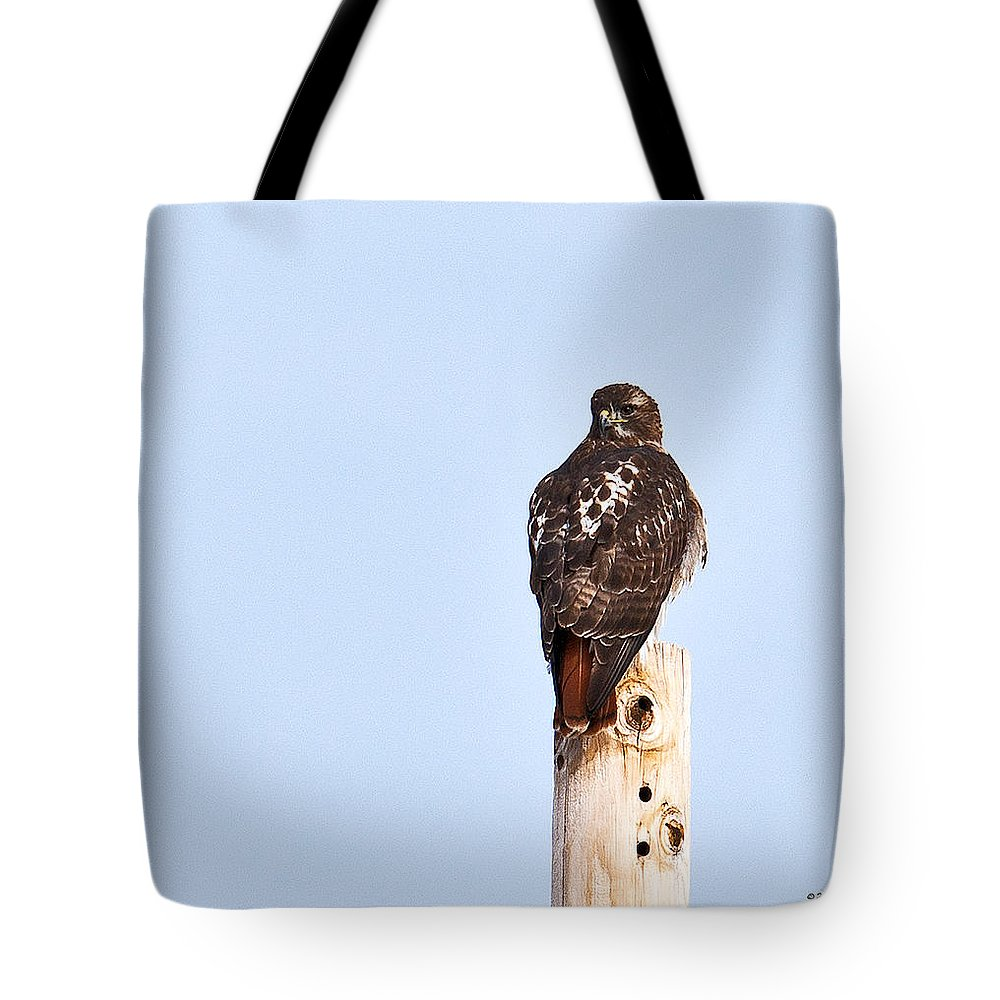 Red-tailed Hawk Tote Bag featuring the photograph Red-tailed Hawk Surveying The Layout by Edward Peterson