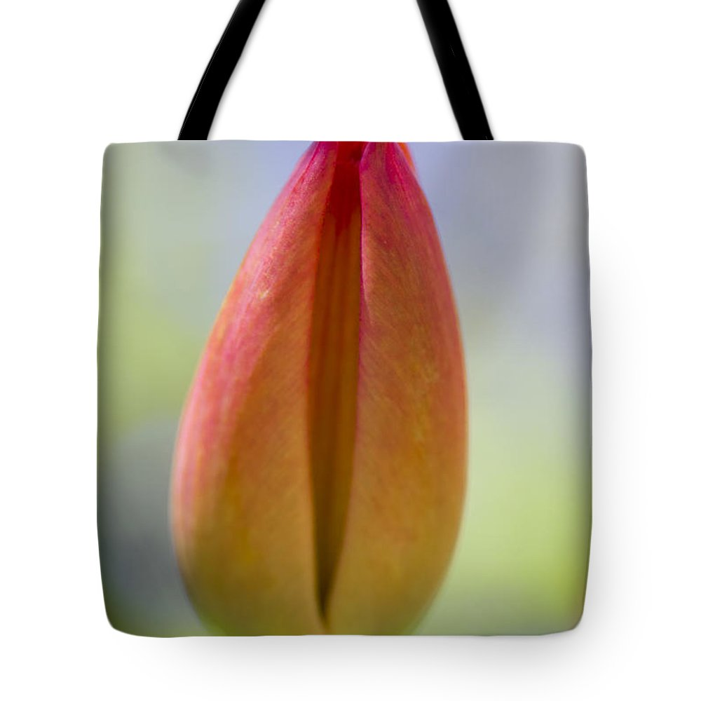 Tulip Tote Bag featuring the photograph Red Tulip Bud by Heiko Koehrer-Wagner