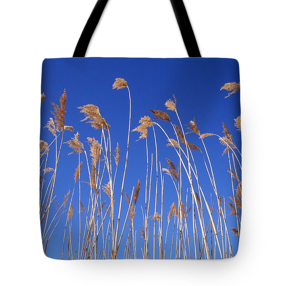 Color Image Tote Bag featuring the photograph Reed Grass by Mike Grandmailson