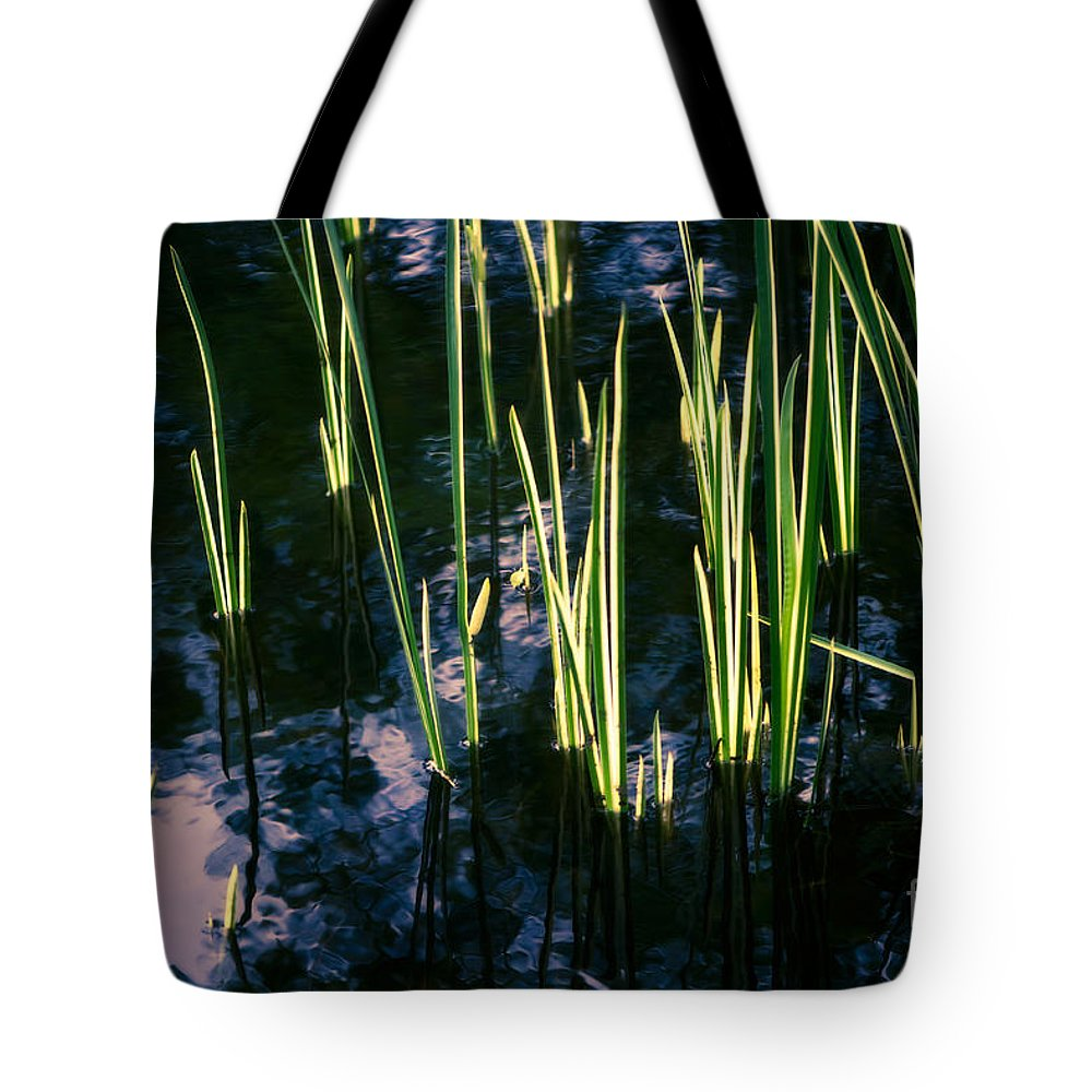Abstract Tote Bag featuring the photograph Reeds At Sunset by Venetta Archer
