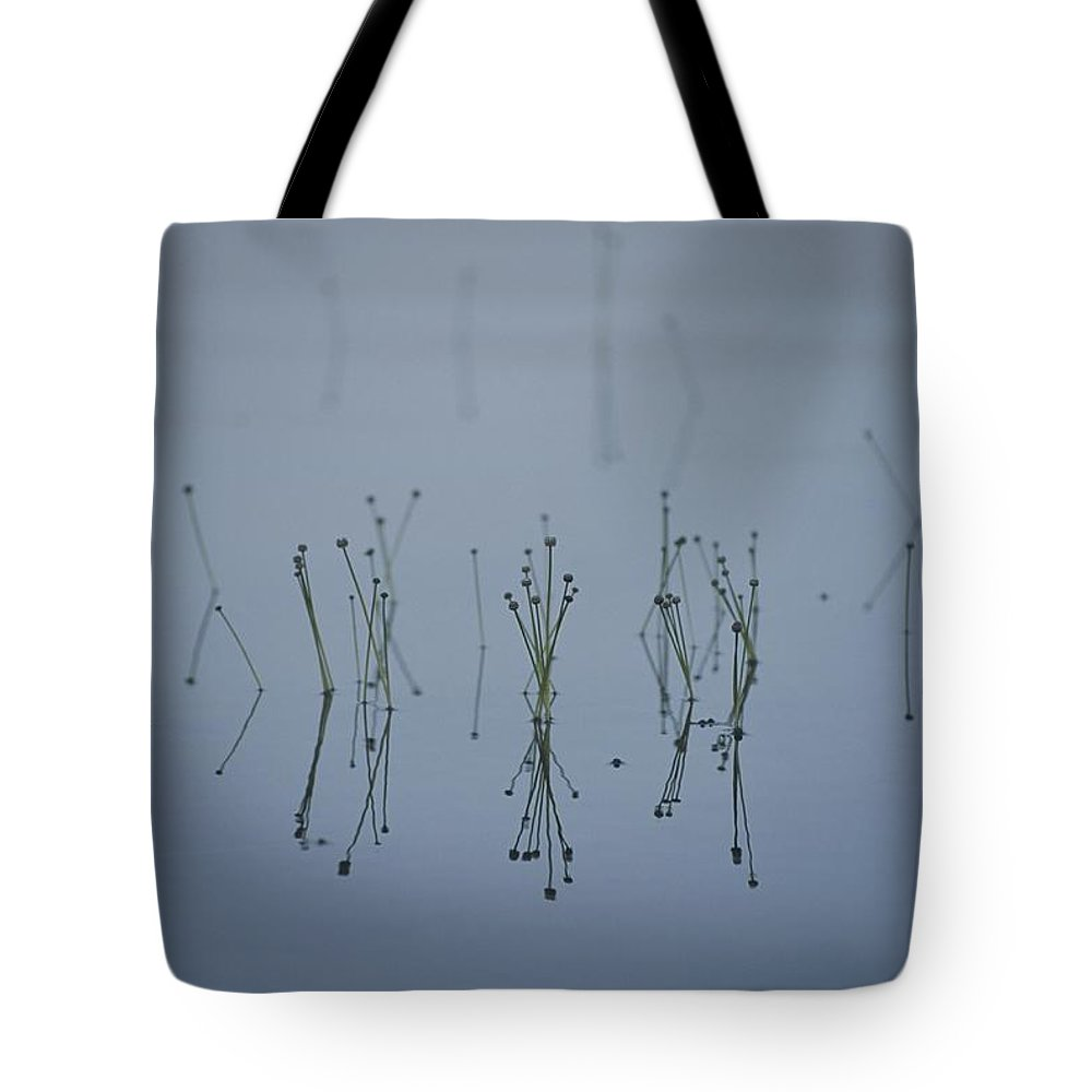 North America Tote Bag featuring the photograph Reflections Of Delicate Aquatic Plants by Michael S. Lewis