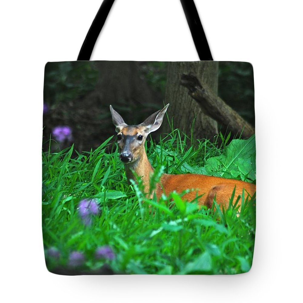Deer Tote Bag featuring the photograph Relaxing In The Morning by Michael Peychich