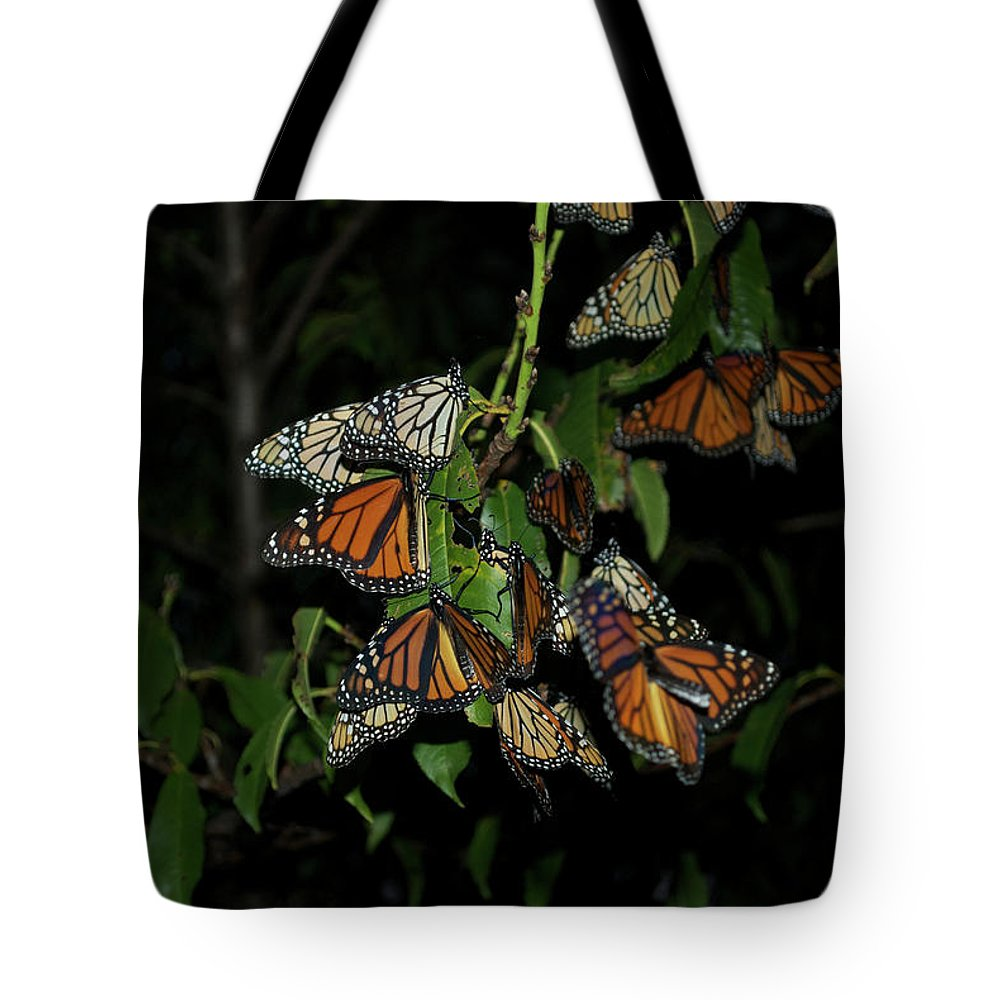 Monarchs Tote Bag featuring the photograph Resting Monarchs by Thomas Woolworth