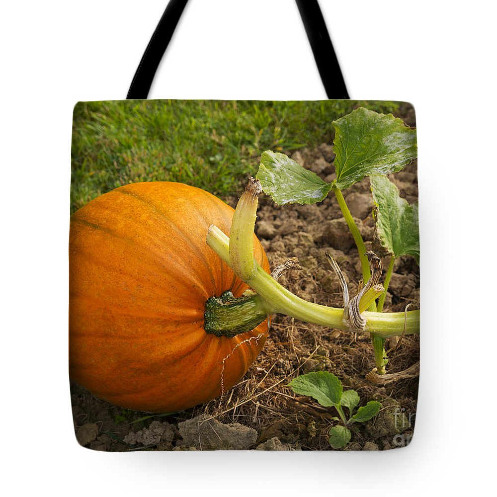 Pumpkin Tote Bag featuring the photograph Ripe Pumpkin by Louise Heusinkveld
