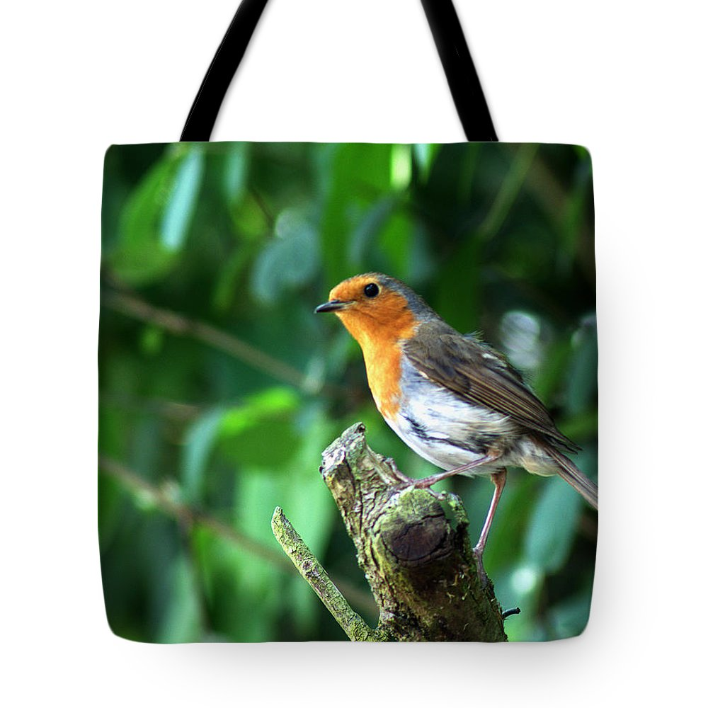 Robin Tote Bag featuring the photograph Robin 1 by Chris Day