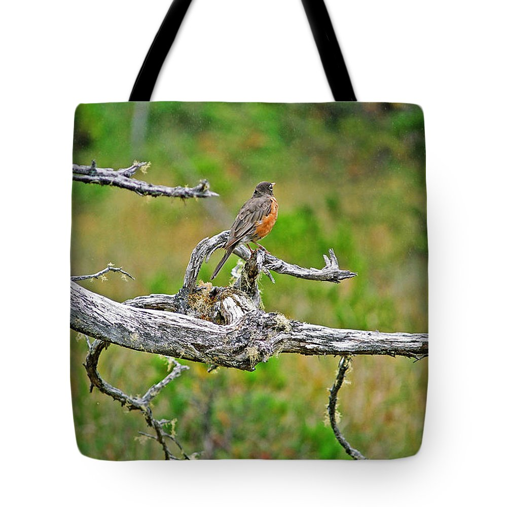 Robins Tote Bag featuring the photograph Robin by Randy Harris