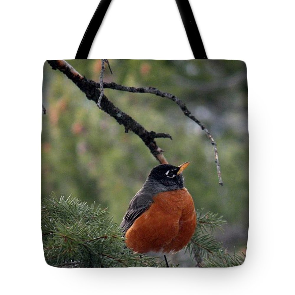 Bird Photos Tote Bag featuring the photograph Robin by Saundra Lane Galloway