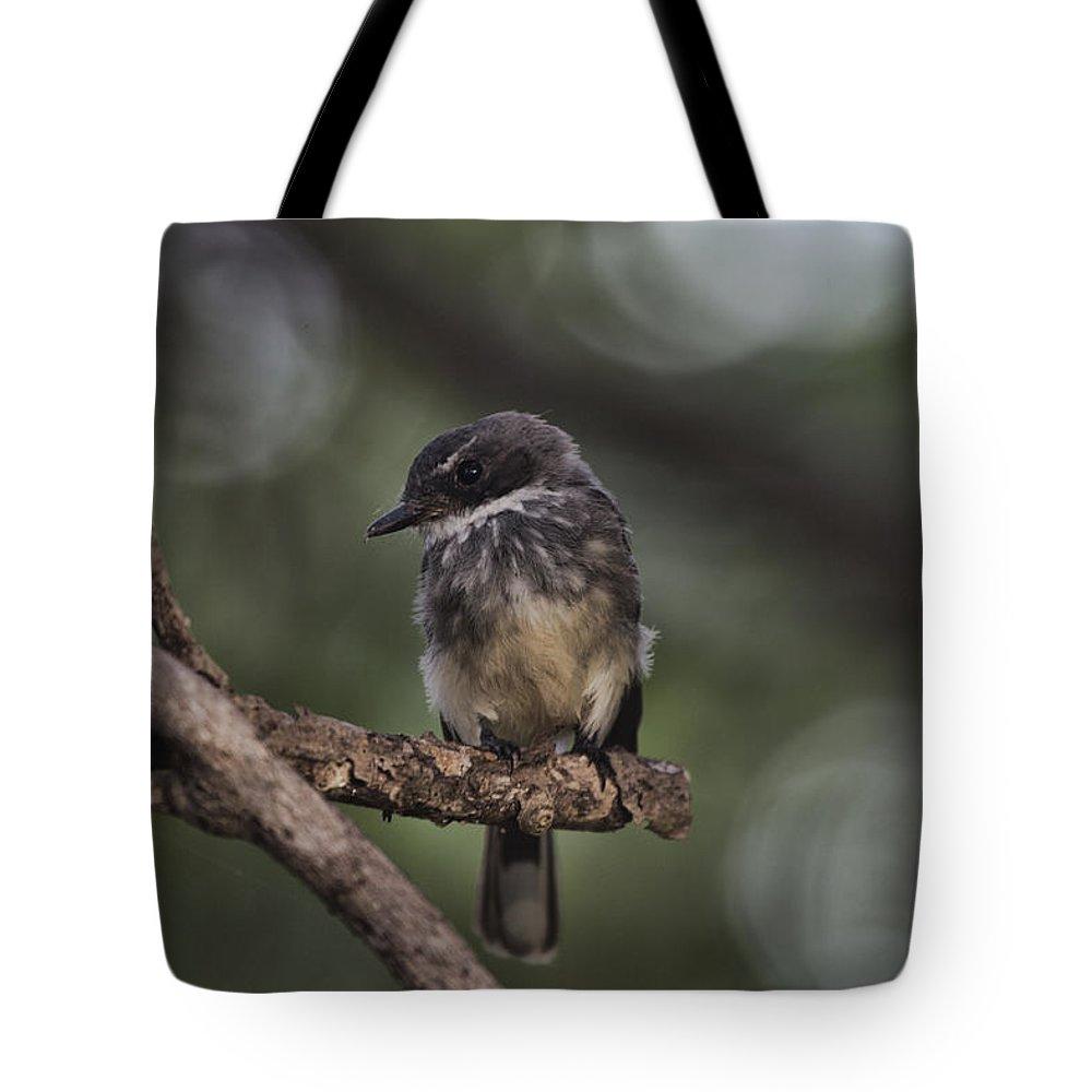 Robin Tote Bag featuring the photograph Robin Top-End Australia by Douglas Barnard
