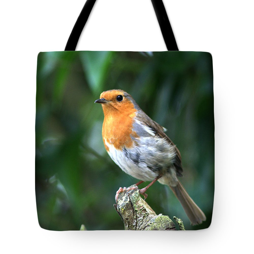 Robin Tote Bag featuring the photograph Robun 3 by Chris Day