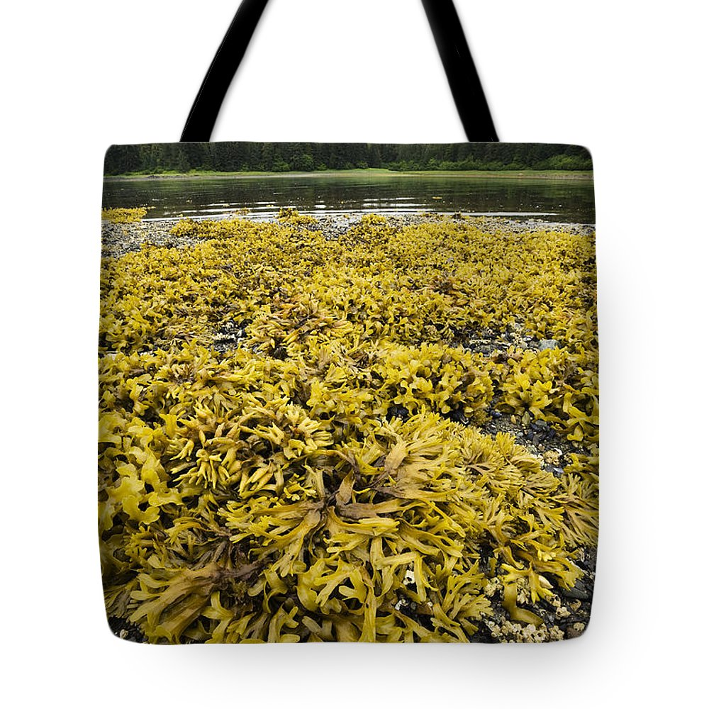 Mp Tote Bag featuring the photograph Rock Weed Fucus Gardneri At Low Tide by Konrad Wothe