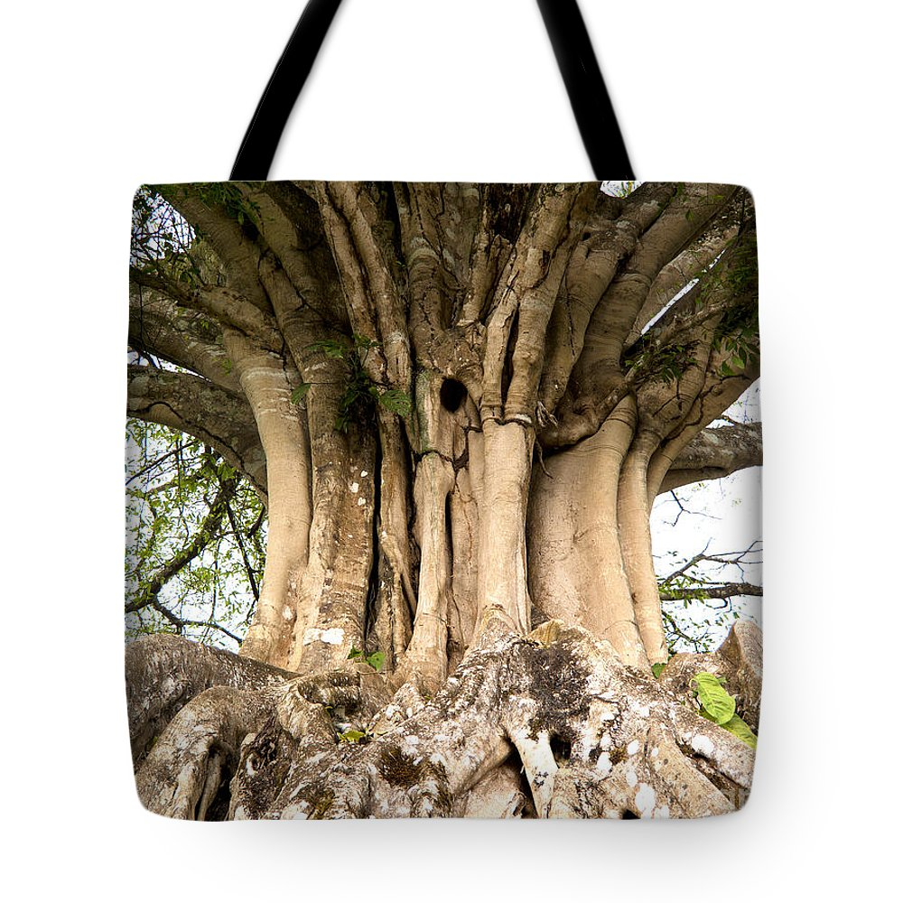 Roots Tote Bag featuring the photograph Roots by Heiko Koehrer-Wagner