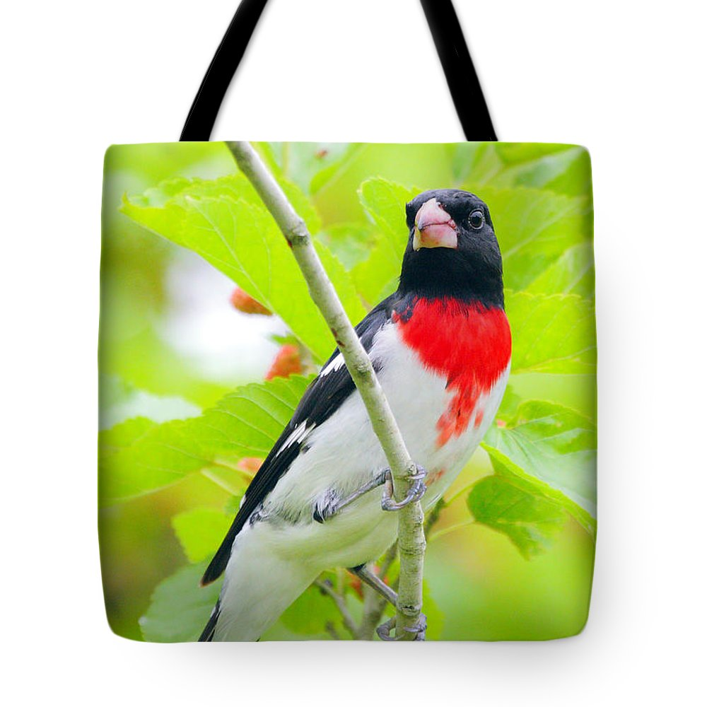 Rose-breasted Grosbeak Tote Bag featuring the photograph Rose-breasted Grosbeak by Andrew McInnes
