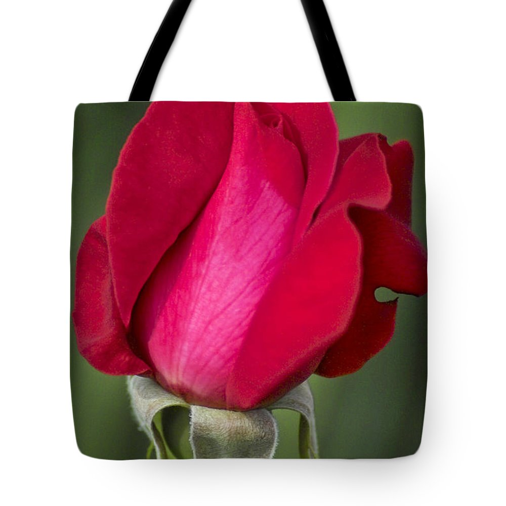 Rose Tote Bag featuring the photograph Rose Flower Series 1 by Heiko Koehrer-Wagner