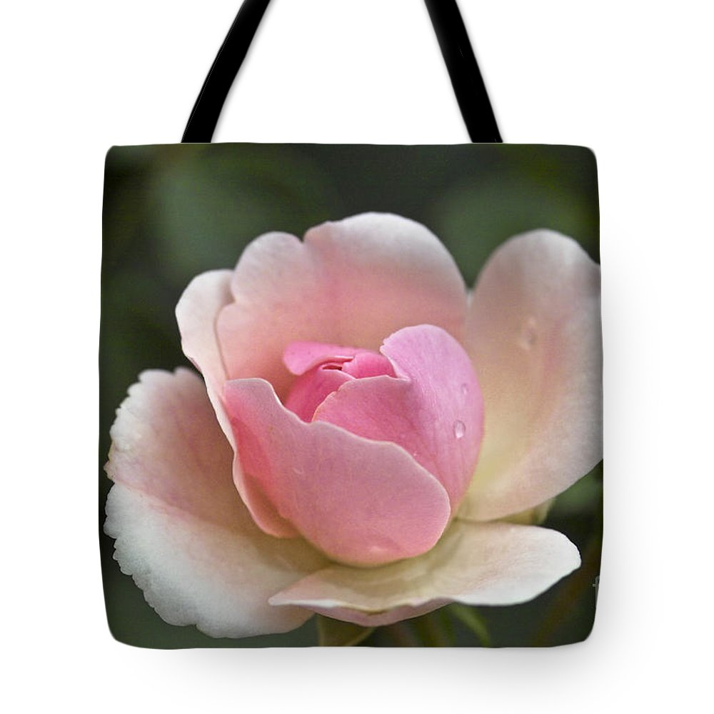 Rose Tote Bag featuring the photograph Rose Flower Series 12 by Heiko Koehrer-Wagner