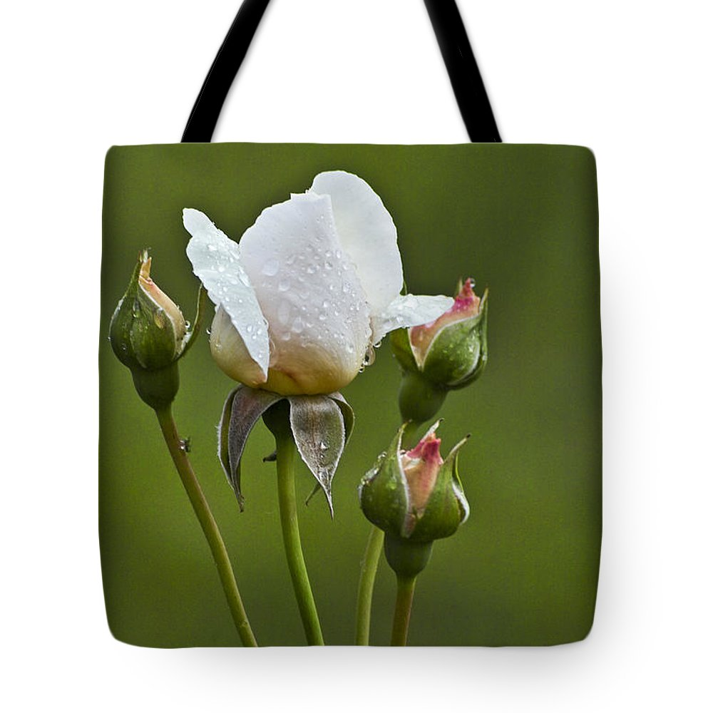 Rose Tote Bag featuring the photograph Rose Flower Series 6 by Heiko Koehrer-Wagner